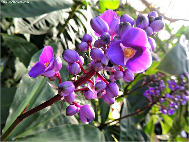 Flores del Jardín Botánico de Montreal