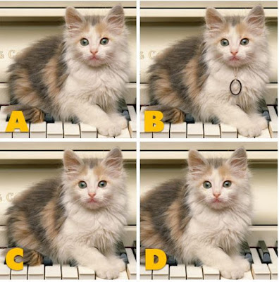 Quiz Diva - Kitty Difference Answers (40 Questions) - Score 100% image1