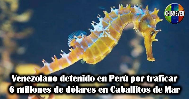 Venezolano detenido en Perú por traficar 6 millones de dólares en Caballitos de Mar