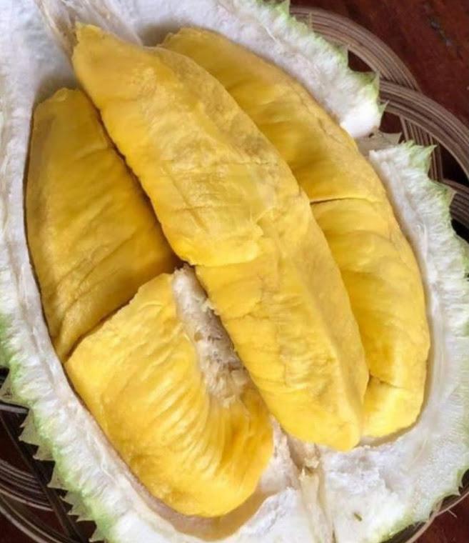 Bibit Durian Musangking Kaki 3 Jawa Timur
