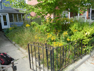 Little Italy Fall Front Garden Cleanup Before by Paul Jung Gardening Services--a Toronto Organic Gardening Company