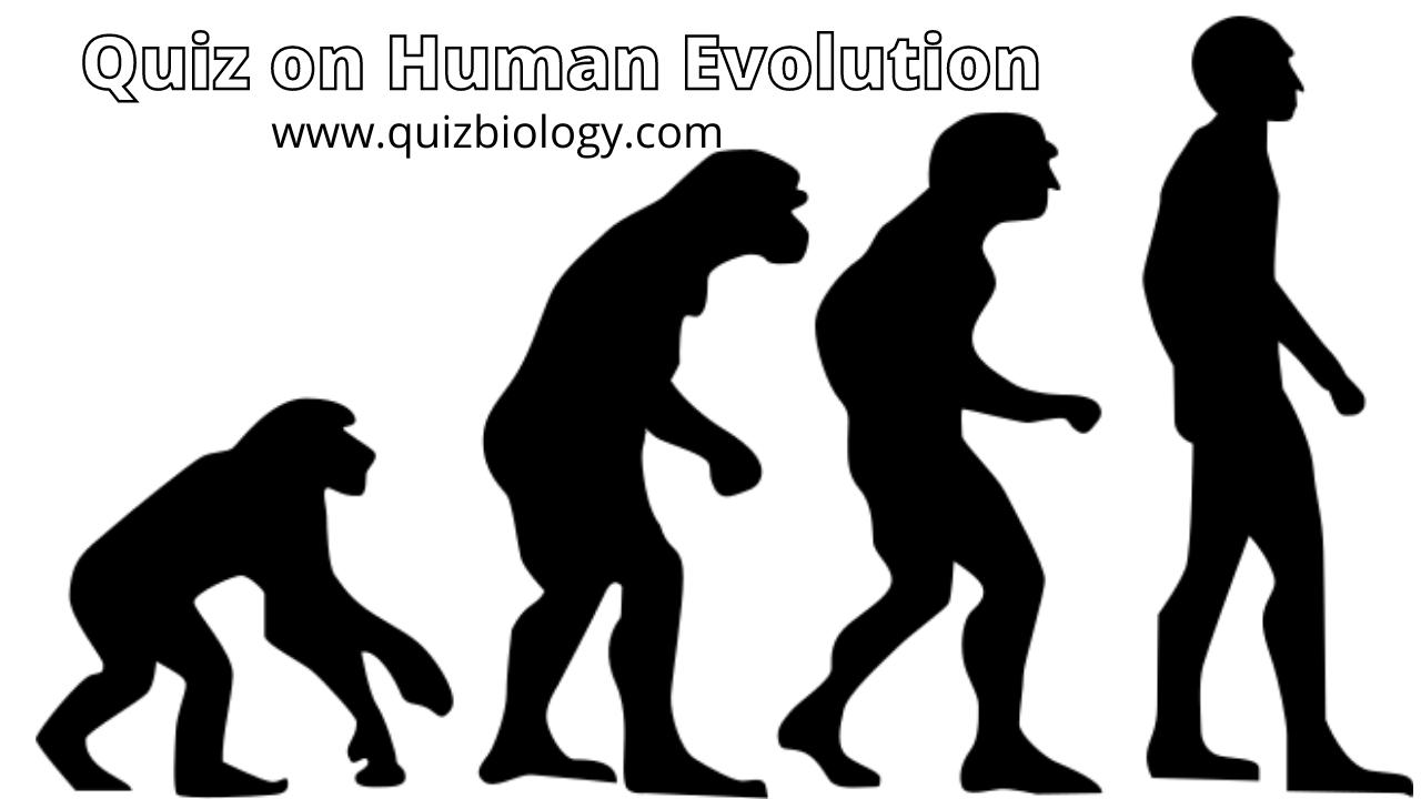 Multiple Choice Quiz on Human Evolution