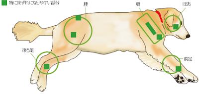locais de escaras em cães paralíticos