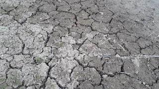 Situação de emergência por conta da seca