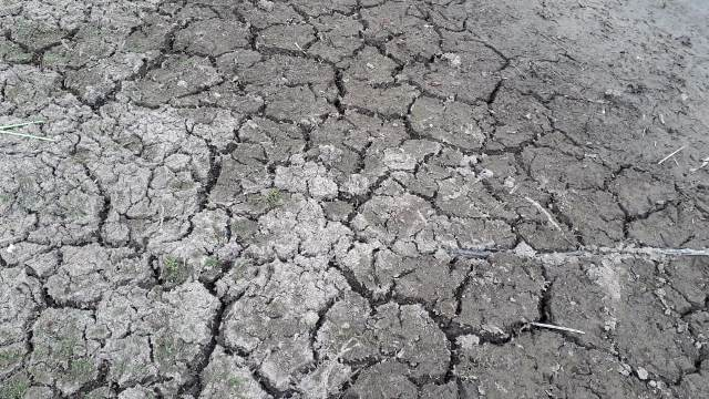 Governo do Estado decreta situação de emergência por conta da seca para Ituaçu e cidades do Sudoeste da Bahia