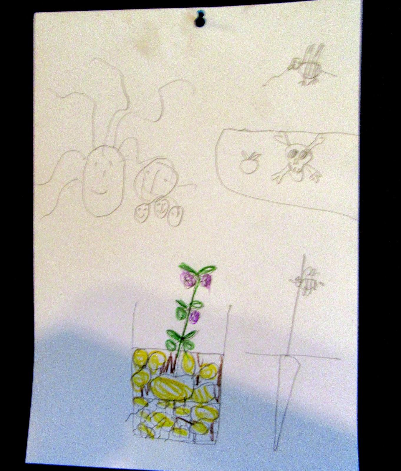 Notizen Aus Dem Bleistiftland Bio Unterricht Im Kindergarten