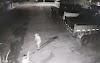 Jataí: Câmeras registram momento em que vigilante reage e mata assaltante