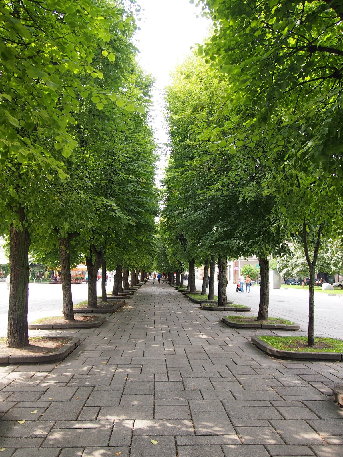 looking down the tree lined streets in Laisves Avenue in Kaunas, Lithuania