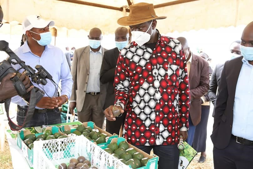 Governor Jackson Mandago urged farmers to plant avocado and macadamia among other high value crops.