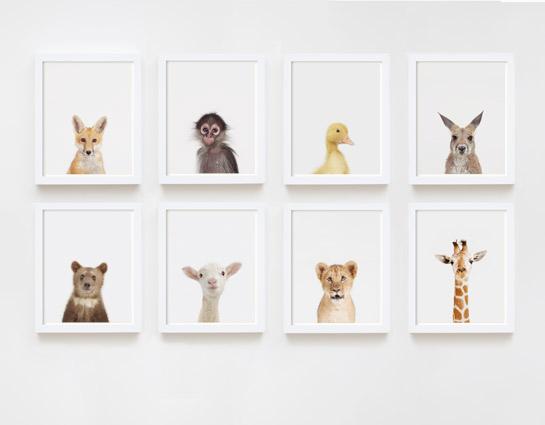 Fotografie fürs Kinderzimmer – Tierkinder Prints von Sharon Montrose ...