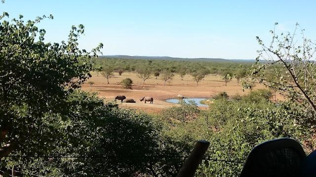 Okutala Wasserloch mit Nashörnern