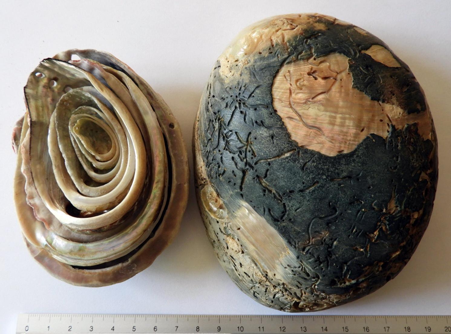 Ο άνθρακας 14 δεν είναι χρήσιμος για τα περισσότερα απολιθώματα