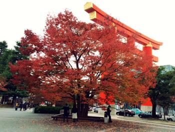 紅葉と真っ赤な鳥居