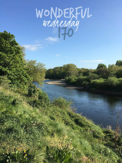 Wonderful Wednesday #170