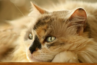 When a cat has separation anxiety, it might be because she's bored.