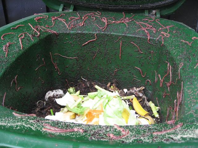 Kompostmarken koser seg i kompostbingen