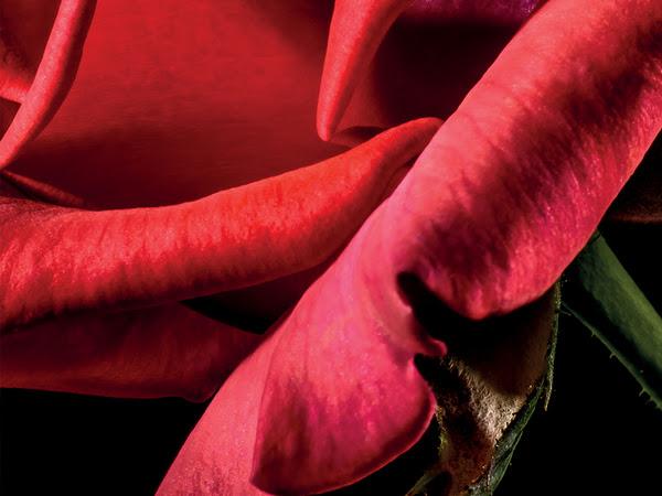 NOUVEAU PARFUM | THE DIFFERENT COMPANY ROSE POIVRÉE - RÉÉDITION 2020