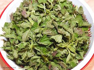 Urzici reteta cu urzica tanara proaspata verde pentru gatit mancare si intarirea imunitatii retete culinare de casa,