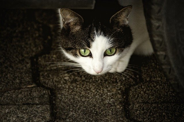 How to Choose the Best Cat Training Supplies