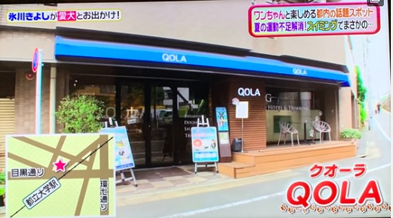 【TV紹介】日本テレビ「ヒルナンデス」にQOLAが紹介…