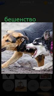 389 фото собака в бешенстве нападает на другую 4 уровень