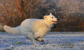 Anjing Yang Sangat Setia Dan Dapat Dipercaya