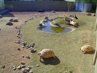 kolam-kura-kura-darat.jpg