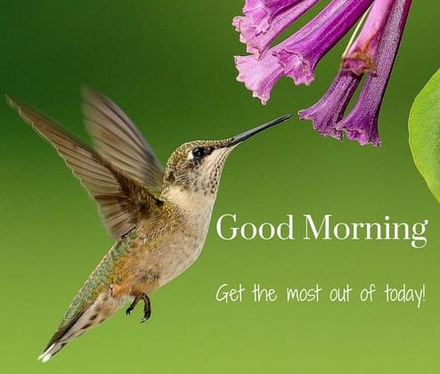 The best 21 Beautiful Good Morning Images [ Latest Update ]-Pinterest