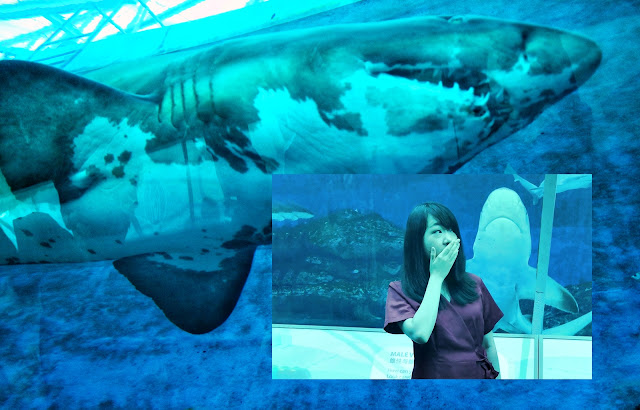 SEA Aquarium, Tempat Instagrammable yang Wajib Dikunjungi di Singapore #TravelokaBlogContest2019