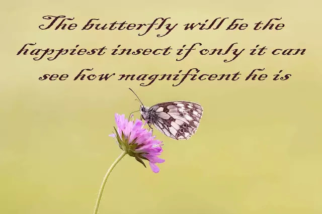 butterfly and love quotes