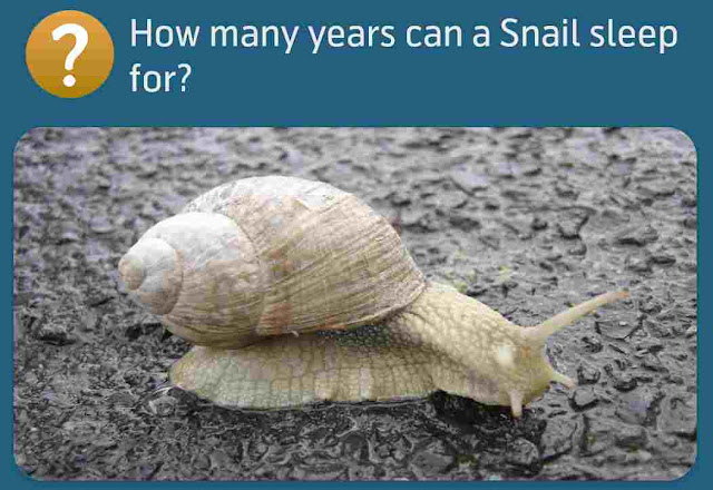 How many years can a Snail sleep for?