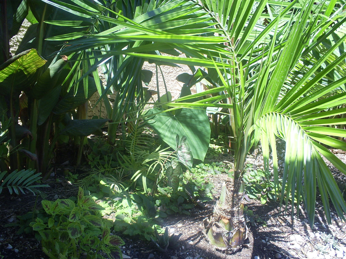 Brad's Tropical Paradise: Understory plants