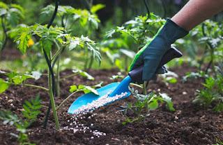 pupuk-pertumbuhan-tanaman