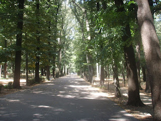 A tree-lined avenue within Florence's Parco delle Cascine. which was once a hunting estate owned by the Medici
