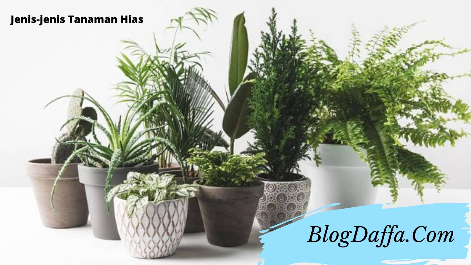 Jenis tanaman hias untuk memperindah rumah