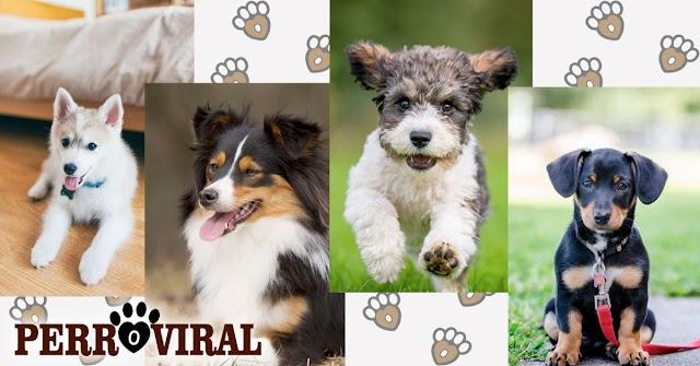 Aquí tienes a los 10 perros mestizos que te enamorarán