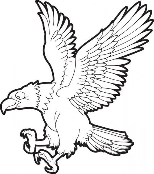 Gambar burung elang sketsa mudah