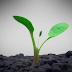 Meio Ambiente: Vamos falar de Sustentabilidade?