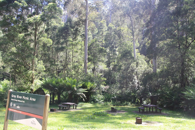 picnic  area in forest clearing