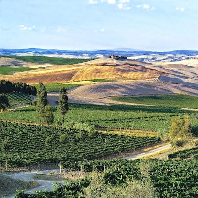montalcino vigne