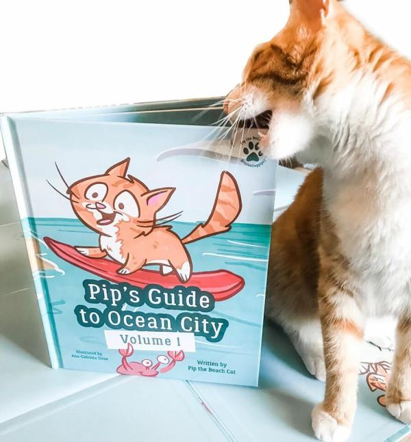 ocean city guide