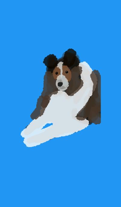 Shetland Sheepdog*