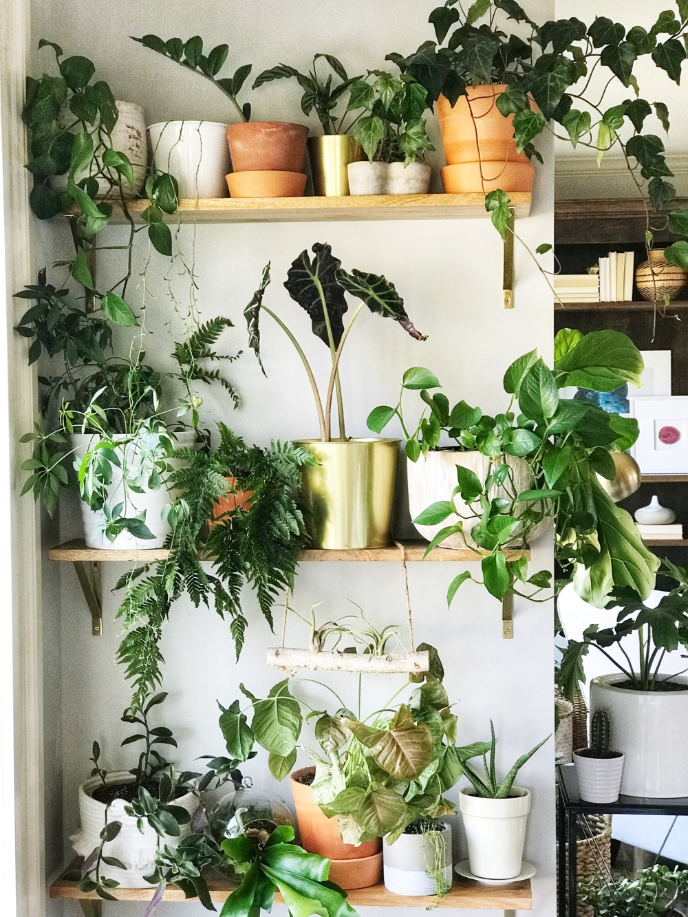 Life Love Larson: Indoor Plant Wall