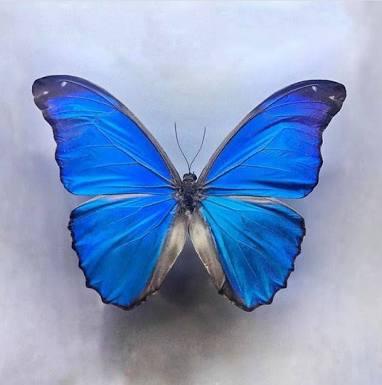 Mavi Kelebekler hangi katliamın simgesi haline gelmiştir?