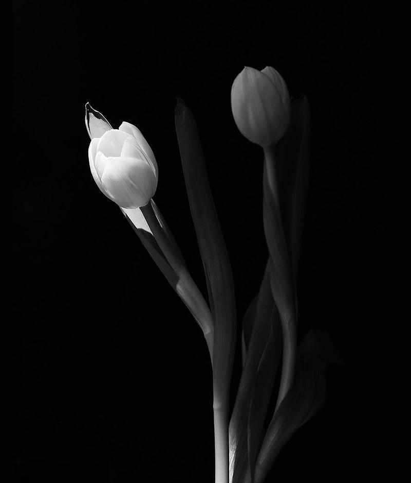 BF (I), by BOYZ & Flowers