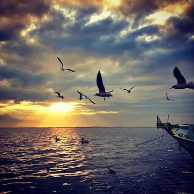 صور بحر مع طيور جميلة