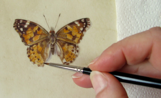 Artist Shevaun Doherty painting a Painted lady Butterfly on calfskin vellum