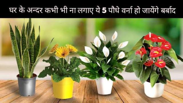 हर सदस्य हमेशा रहेगा कंगाल जिस घर में लगे हैं ये 5 पौधे