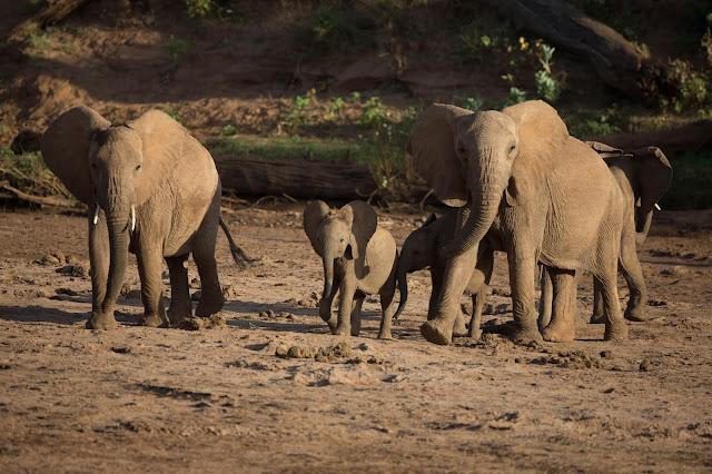 Foto von drei Elefanten