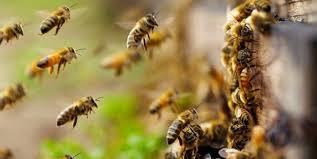 Γιάννενα: Γιορτή Της Μέλισσας Στον Κατσικά Την Τρίτη 7 Αυγούστου!